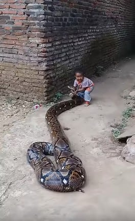 boy and snake