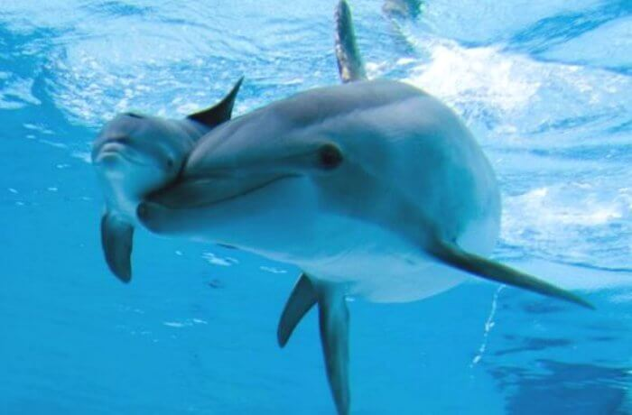dolphin-mom-baby-smiling