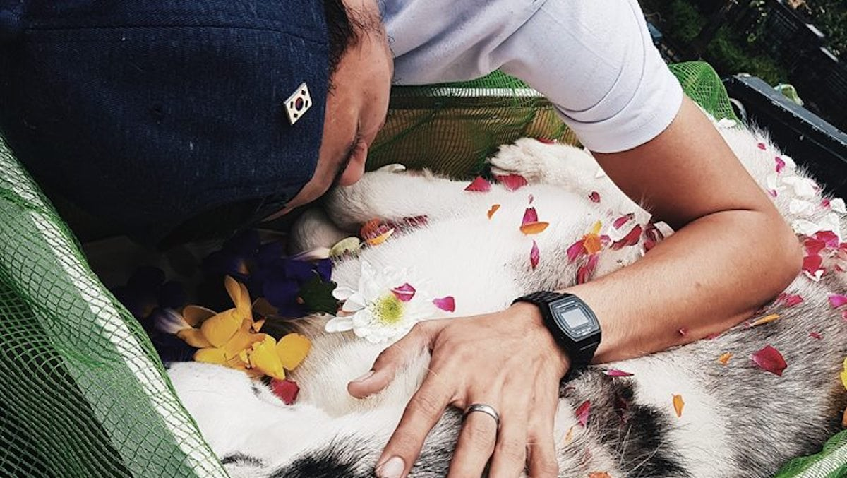 This Man Lost His Dog But Touched The World's Hearts