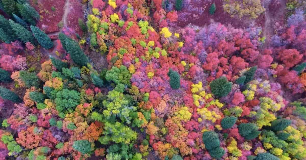 man-captures-purple-foliage-in-utah-with-his-drone