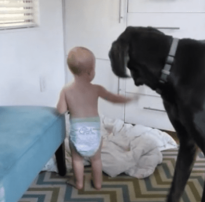 toddler-orders-great-dane-out-bed