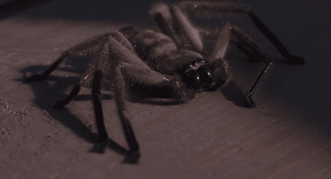 spider-closeup-creeepy