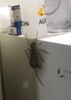 spider-carries-mouse-fridge