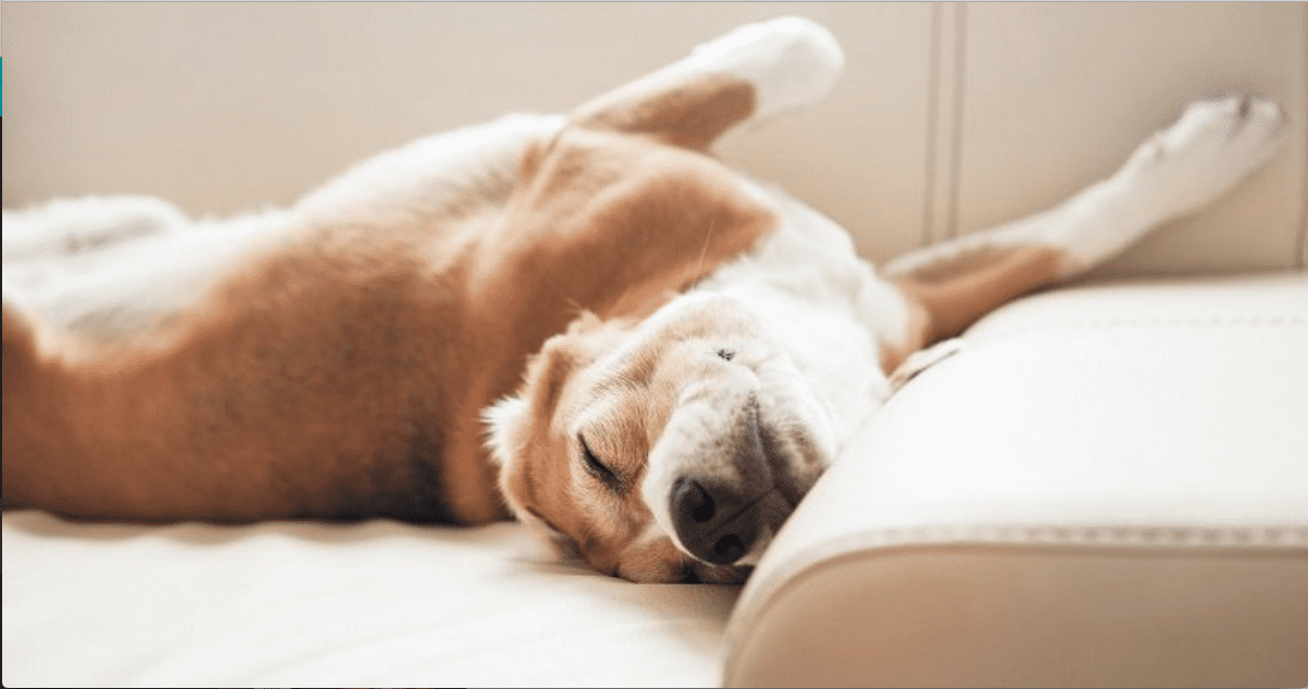 https://dogtime.com/dog-health/dog-behavior/48213-dogs-sleeping-positions-habits-tell-lot-personality-health