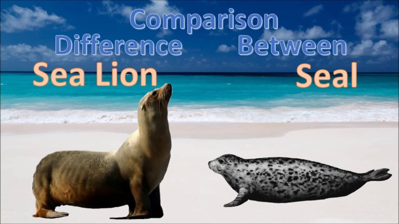 difference-between-sea-lion-seal