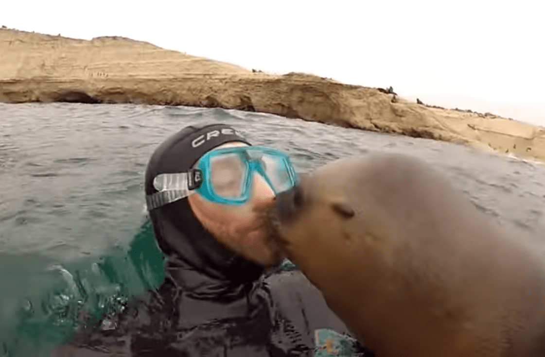 julian-bala-diver-sea-lion-kiss
