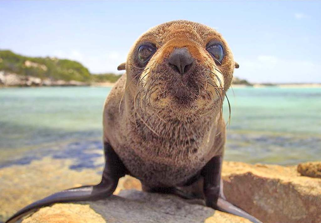 cute-baby-sea-lion