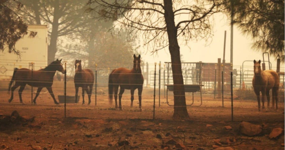 how-to-help-animals-displaced-by-california-wildfires