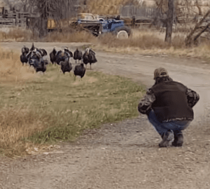 turkey-whisperer