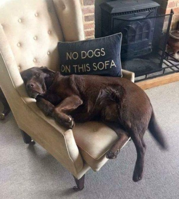 40+ Hilarious Animals Who Don't Care About The Rules Or What You