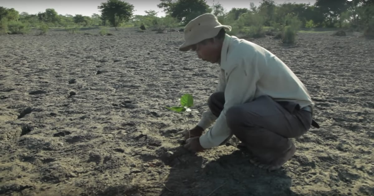 Man Plants A Tree Every Day For 40 Years Creates A Forest