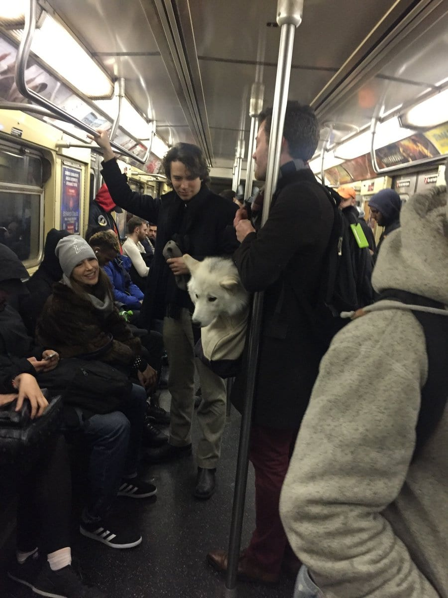 Nyc Subway Bans Dogs Not In Bags Owners Get Creative
