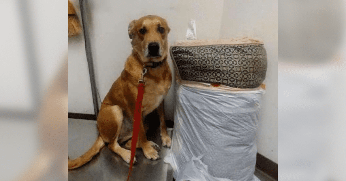 Staff Confused When Dog Dropped Off At Shelter With His Bed And All Of His Toys