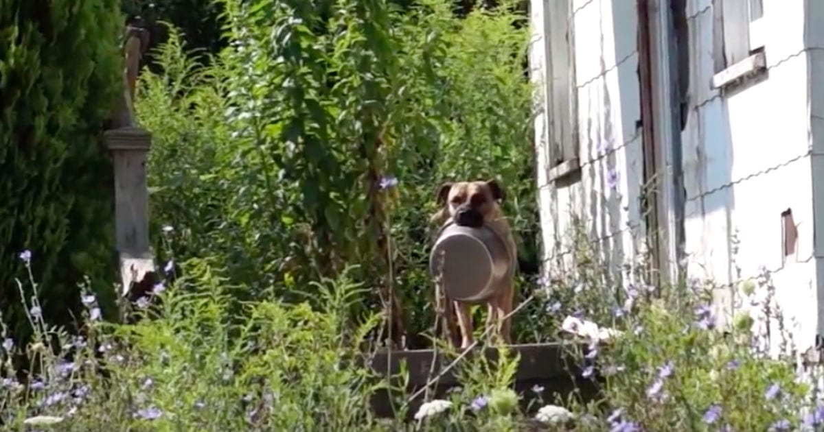 Homeless Dog Carries Food Bowl Everywhere He Goes