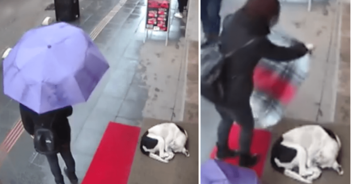 Security Camera Captures Woman Performing Sweetest Act Of Kindness For Freezing Stray Dog