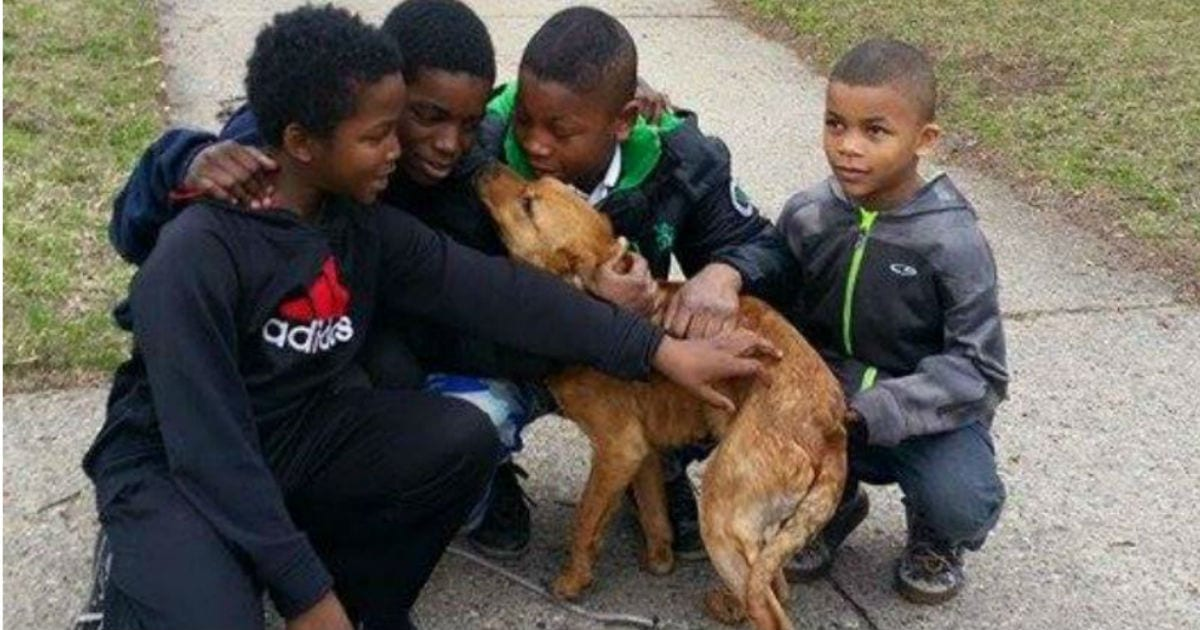 Four Heroic Young Boys Save Abandoned, Skinny Dog Who Was Tied Up With Bungee Cords