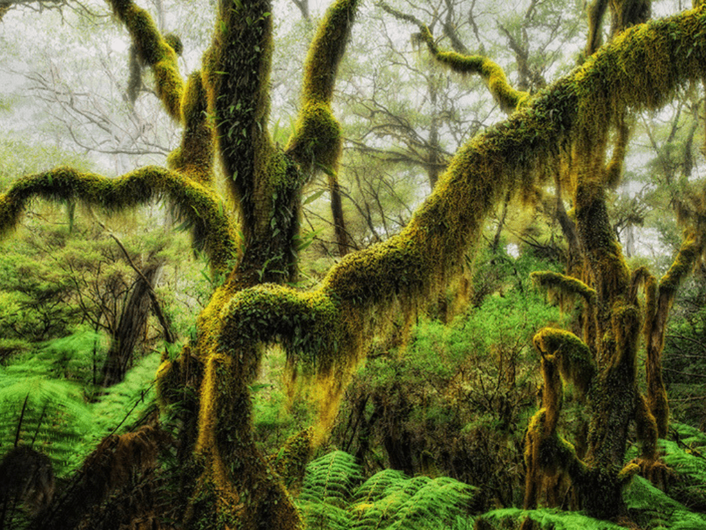 30 Of The Most Beautiful Trees In The World