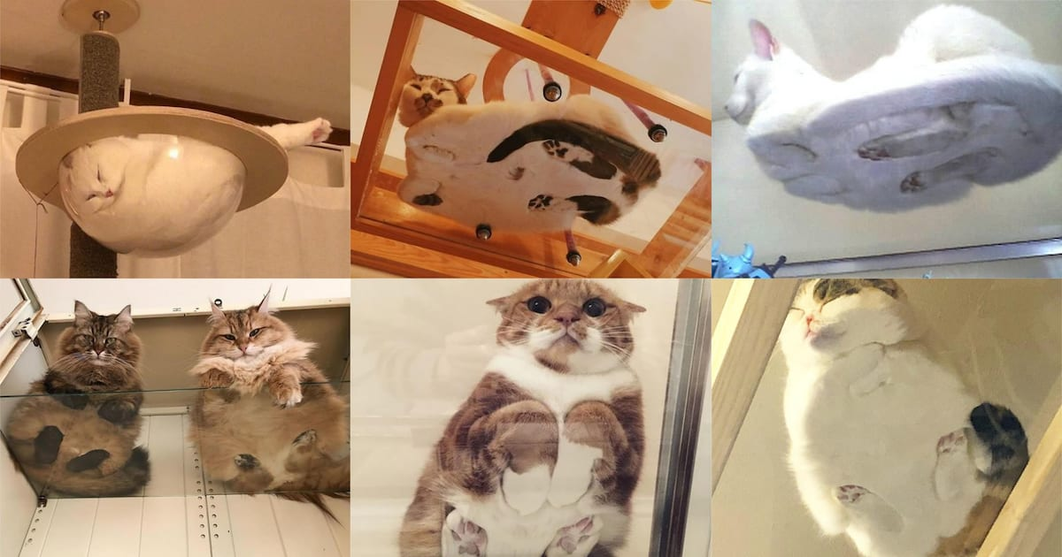 50 Hilarious Photos Of Cats On Glass Tables