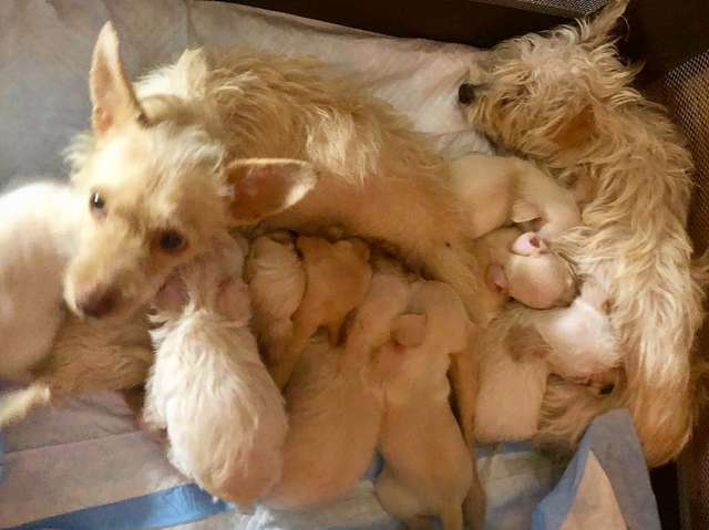 Stray Mother Dogs Found Raising Their Puppies Together