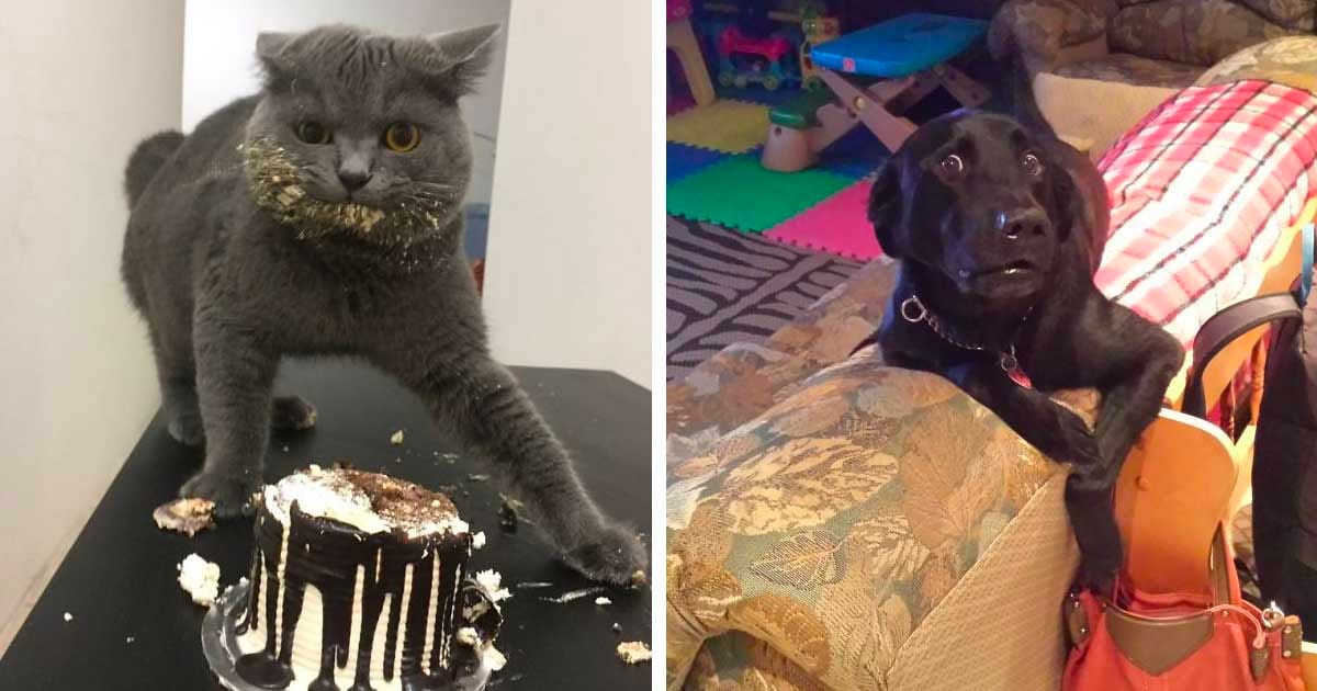 22 times we caught our mischievous pets stealing and they didn't
