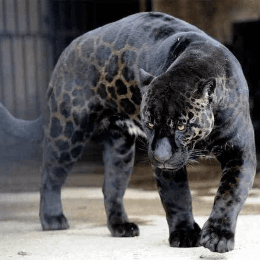 45 Animals Who Won The Genetic Lottery