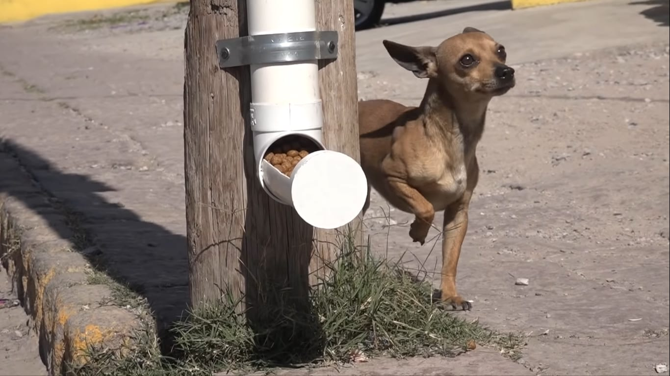 Stray Dogs In Mexico Are Now Getting Free Healthcare