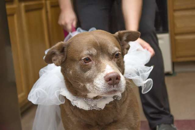 shelter-marries-dogs-jack-diane