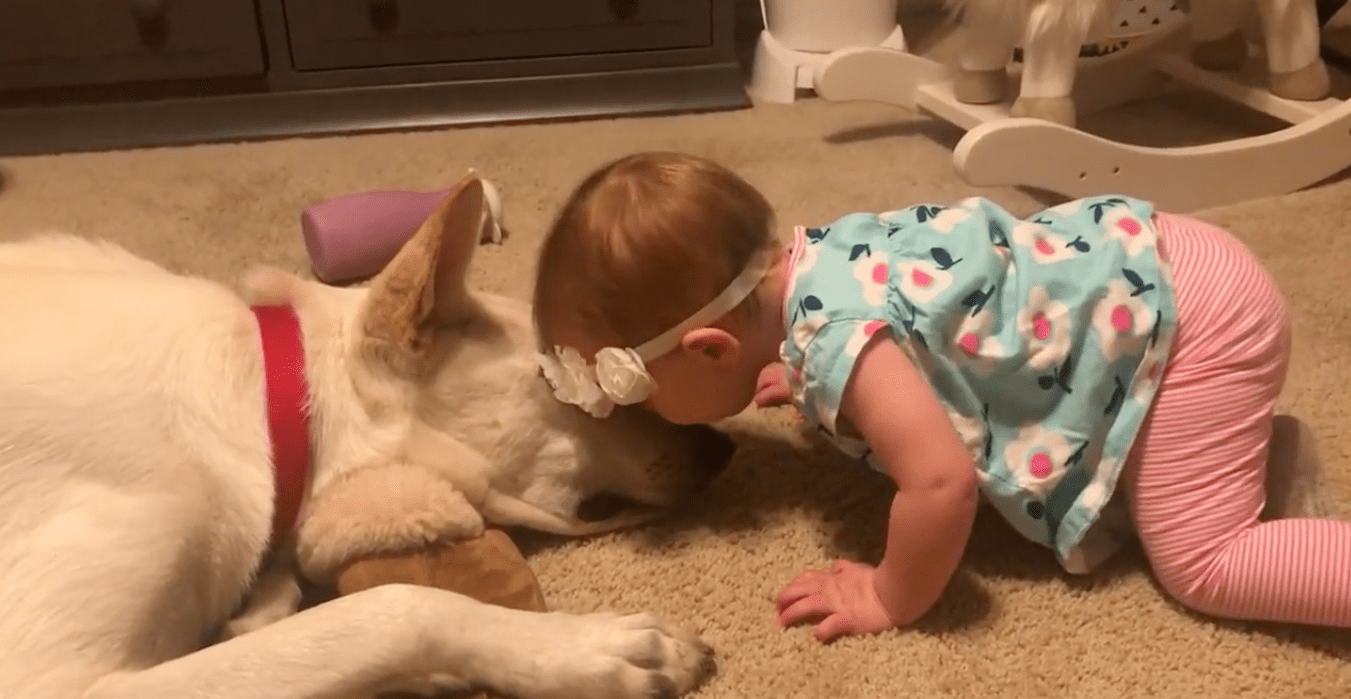 baby-kisses-dog