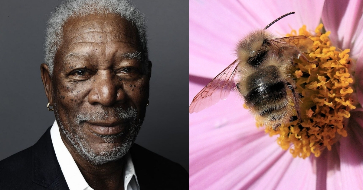 Morgan-Freeman-Turned-His-Ranch-Into-A-Bee-Sanctuary