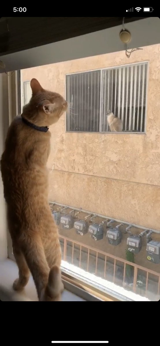 Cats Falls In Love After Seeing Each Other Through Window