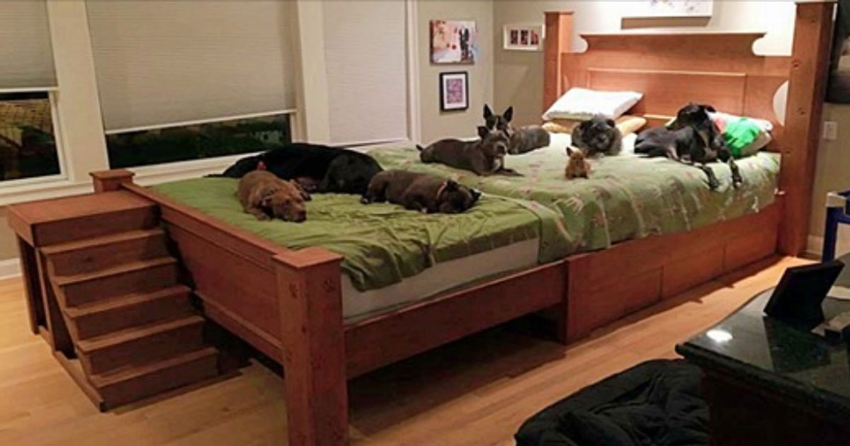 Couple Builds A Customized Giant Bed So All Of Their Rescue Dogs Can Sleep Together With Them
