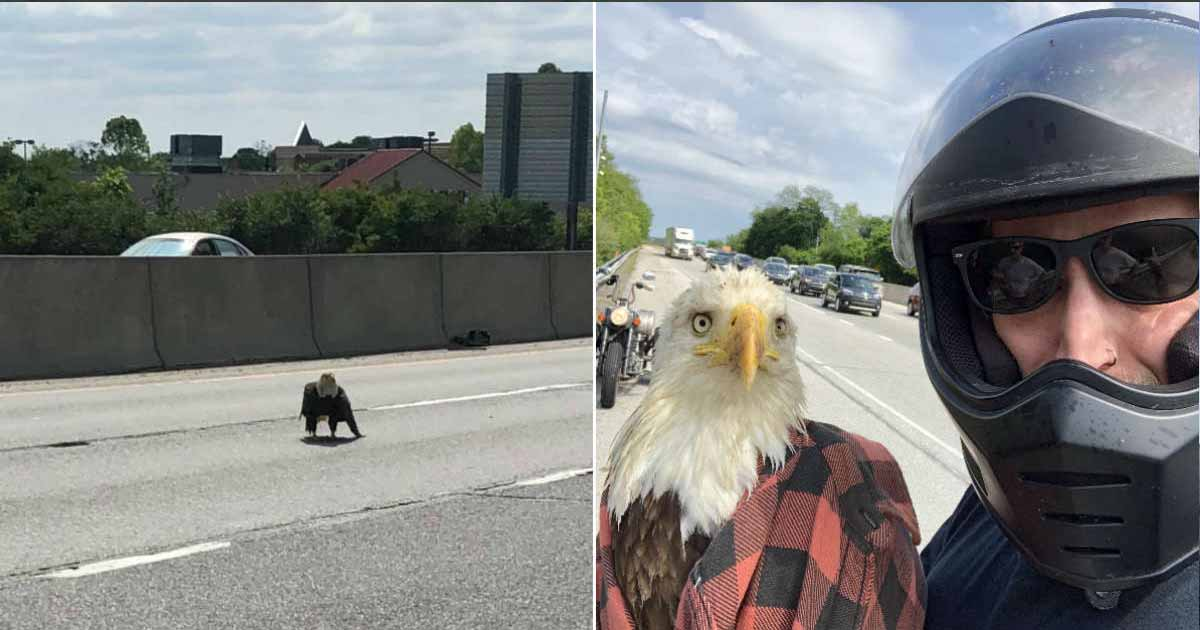 https://www.thedodo.com/in-the-wild/man-saves-injured-bald-eagle-on-highway
