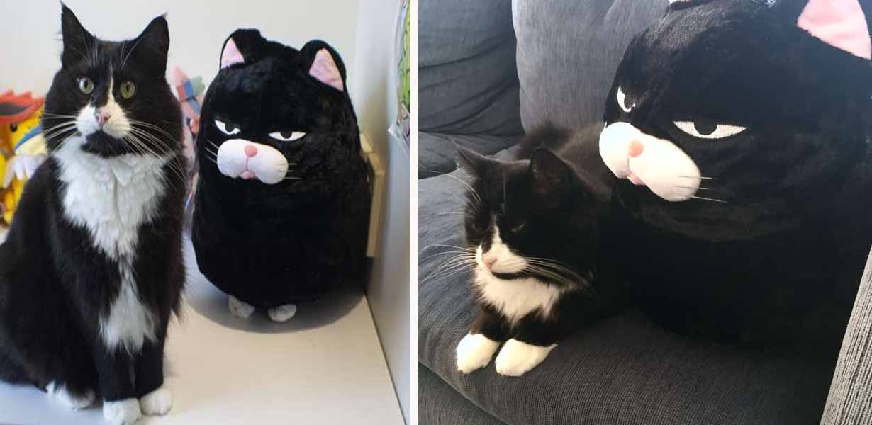 https://www.thedodo.com/close-to-home/cat-is-obsessed-with-lookalike-pillow