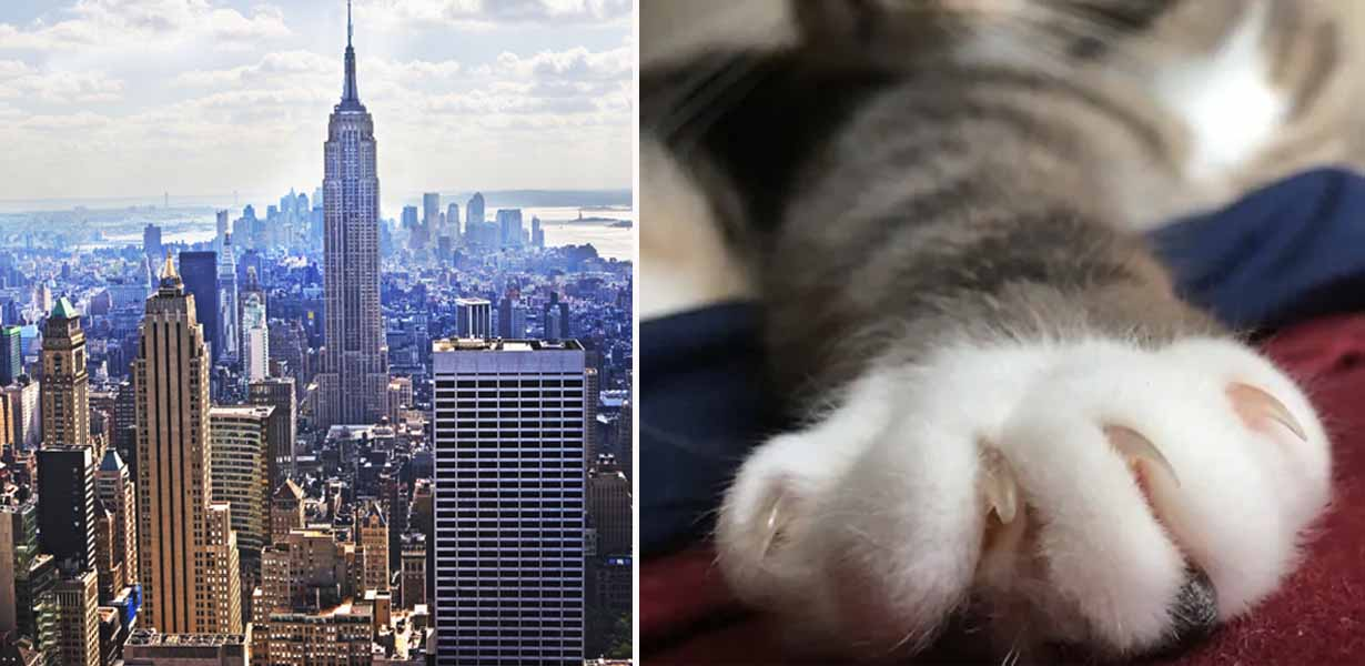 New York State Is First To Pass Bill Making It Illegal To Declaw Cats