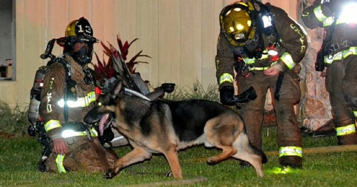 Firefighters Follow Retired Police Dog To Toddlers In House Fire