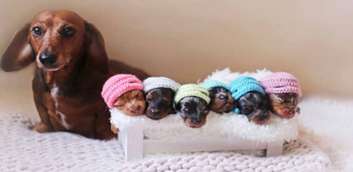 Wiener Mom Poses With Babies In Adorable Photo Shoot