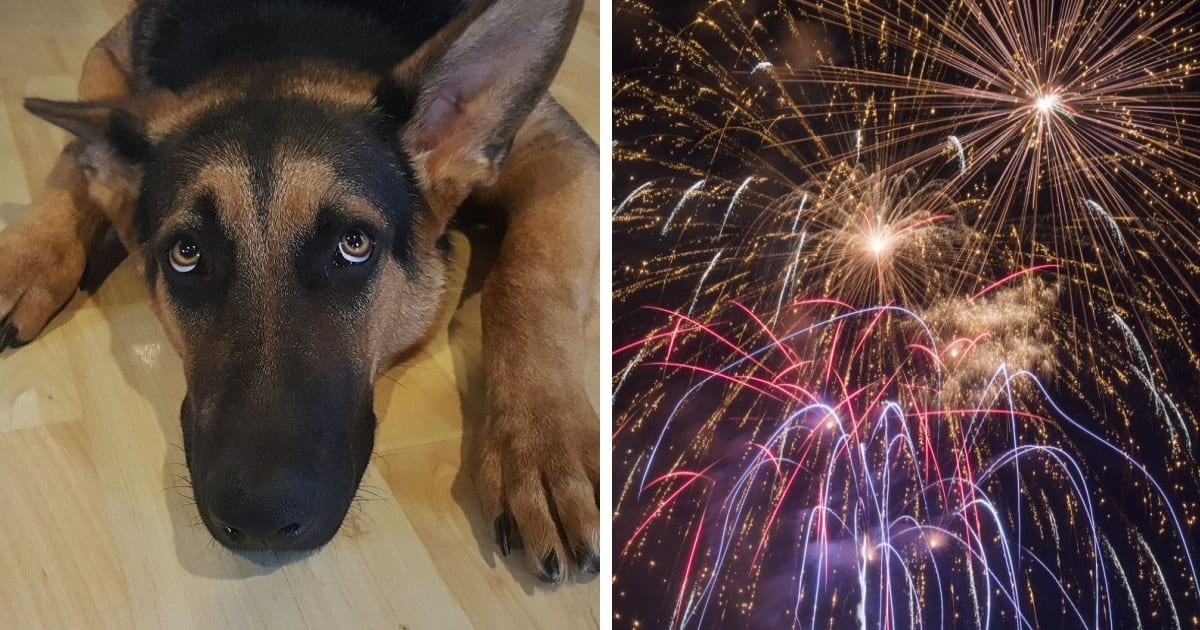 Italian Town Uses Silent Fireworks To Help Animals