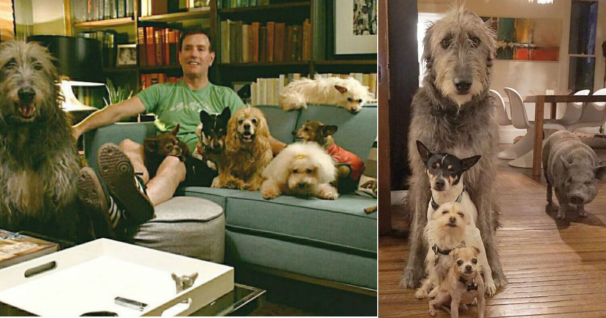 Man adopts all of the overlooked senior animals from shelter