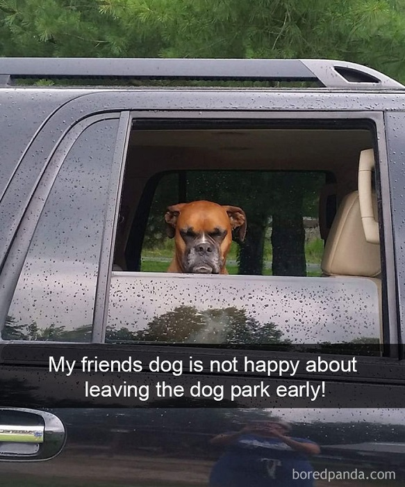 75 of the funniest dog photos captured at the perfect time