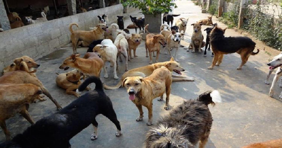 https://www.thenewsminute.com/article/disappearing-stray-dogs-south-india-95661