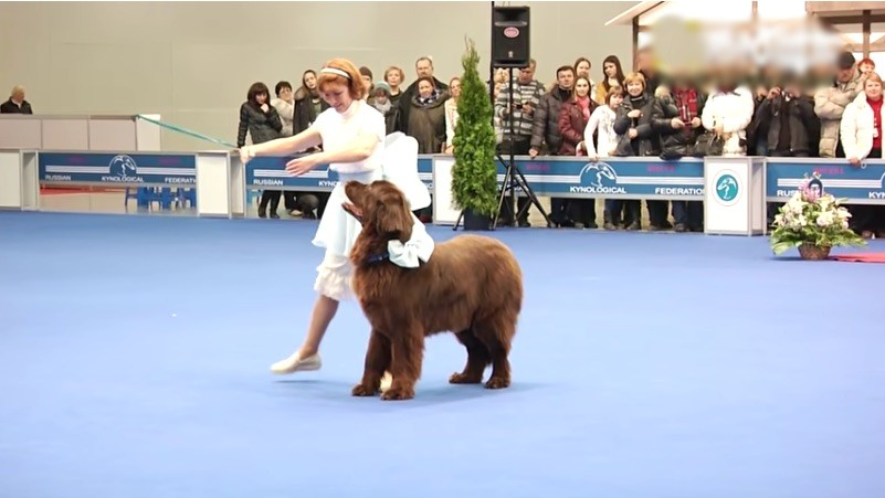 Dog And Woman Charm Crowd With Elegant Dance