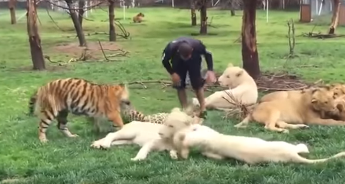 Zookeeper protected from leopard