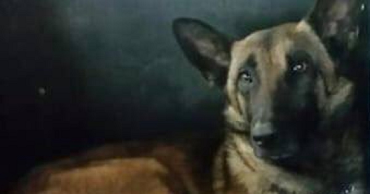 K9 Crosses Rainbow Bridge After Hit And Run Accident On The Job