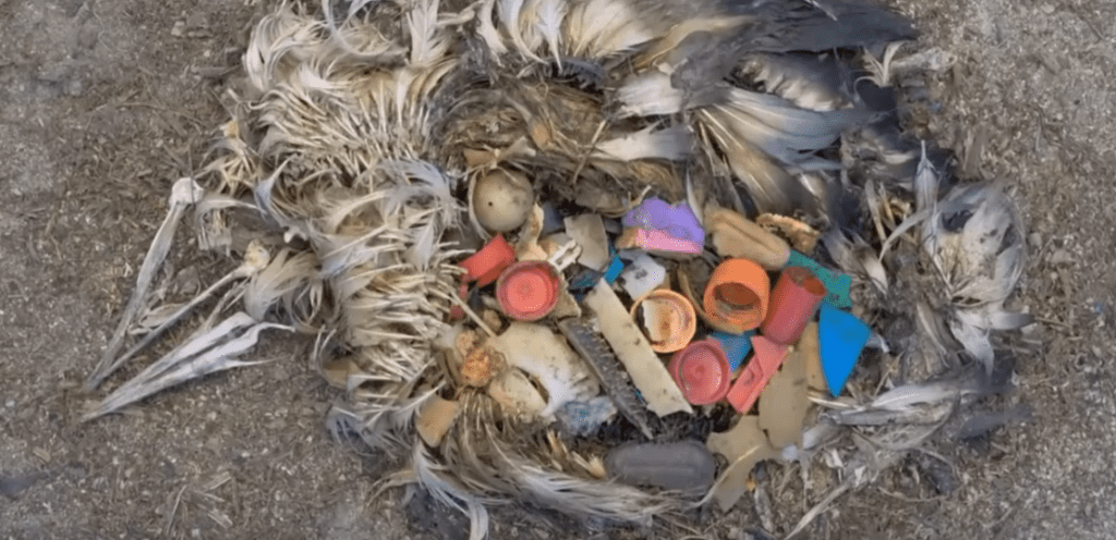 Plastic_Consumed_By_Birds