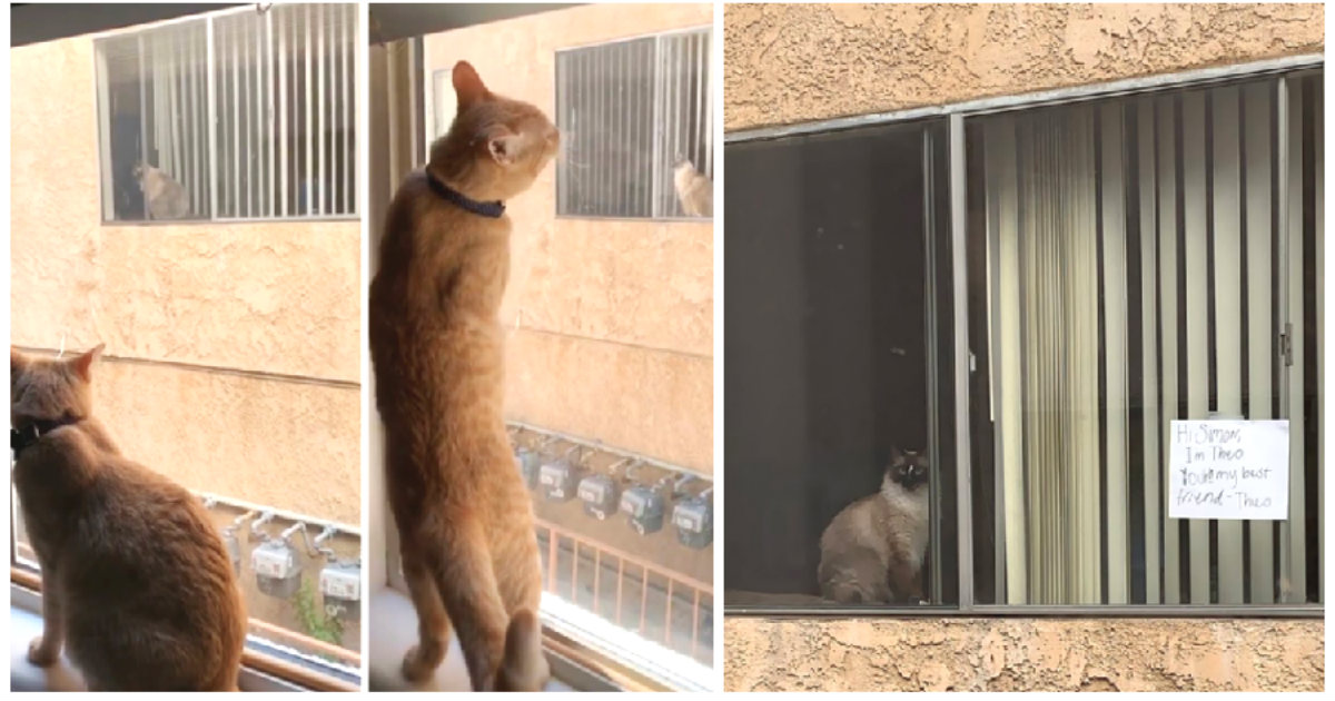 Owner learns her cat is in love with neighboring cat then one day finds a message posted for her cat