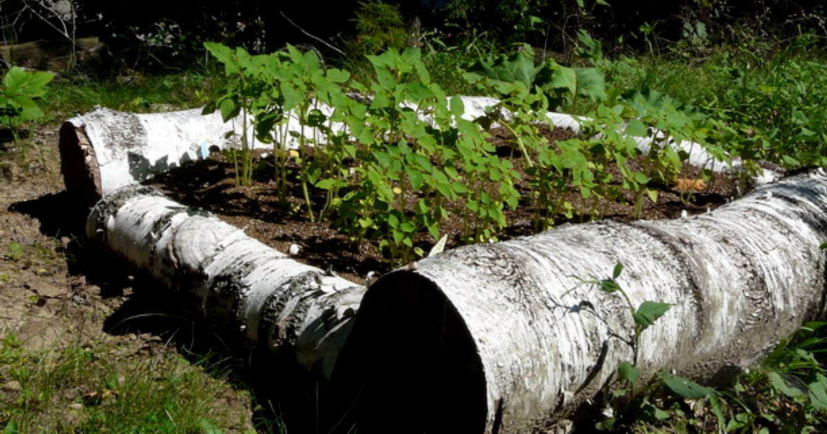 50 Ways To Turn Fallen Logs And Branches Into Beautiful Uses Around The Home