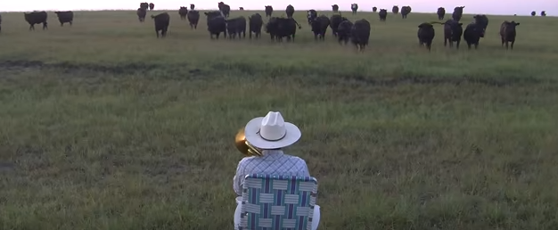 Cows_Attracted_To_Music