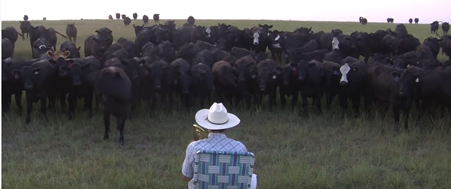 Cows_Are_Audience