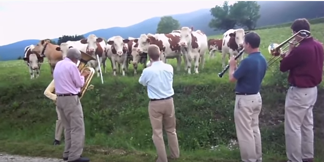 Band_Plays_Music_For_Cows