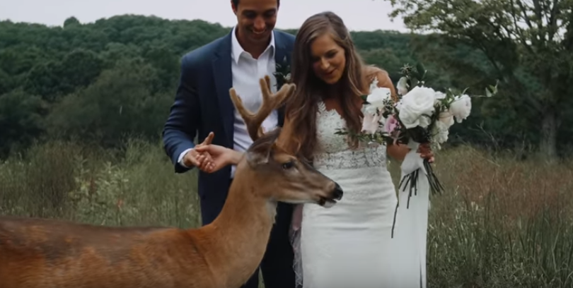 Deer_With_Wedding_Couple